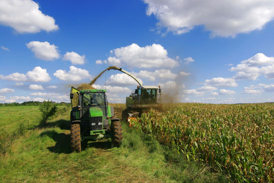 Promo - Harvesting corn crop